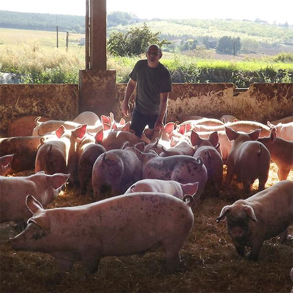 Cochon fermier