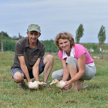 Canard fermier